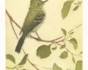 Pacific-slope Flycatcher, Original Etching