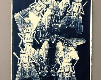 Housefly Original Cyanotype Signed