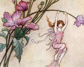Fairy Fridge Magnet - Fairies Play on Pink Poppy Flowers - Warwick Goble