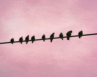 Birds on a Wire Photograph, Pink Nursery Print, Little birds Photograph, Little Girls Room Print, Pink and black Wall art, 8x12 and up