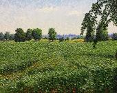 """Original Impressionist Oil Impasto Landscape 16x20 """"Young Corn Field"""""""