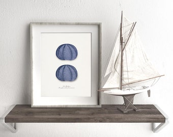 Coastal Decor Indigo Blue Sea Urchins Giclee Art Print