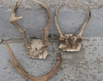 deer antlers  repurposing natural decor decorating woodlands cabin decor man cave