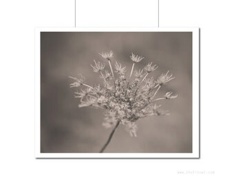 Floral Art | Flower Photography | Sepia Black and White Photography | Queen Anne's Lace Wall Art | Home Decor | Neutral Tones Nature