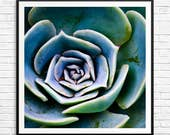 gardening gifts, succulent print, large succulent print, large succulent art, large square wall art, large square art prints, garden gifts