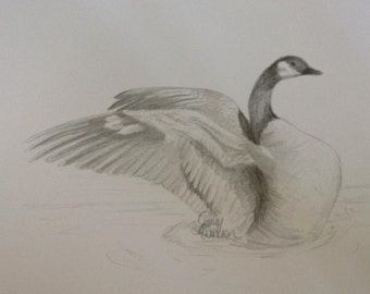 Canada Goose Pencil Drawing Print