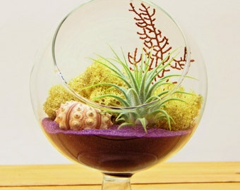 "Air Plant Terrarium Kit / 4"" Round Glass Pedestal / Purple"