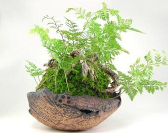 Tan Kusamono Planter, Bark Textured Bonsai Accent Pot, Small Natural Planter, Kokedama Dish, Ceramic Bark Plant Pot, Unglazed Pot 10-16-80
