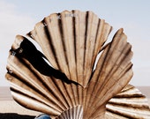 Special listing for Fiona: Aldeburgh shell sculpture photograph, A3
