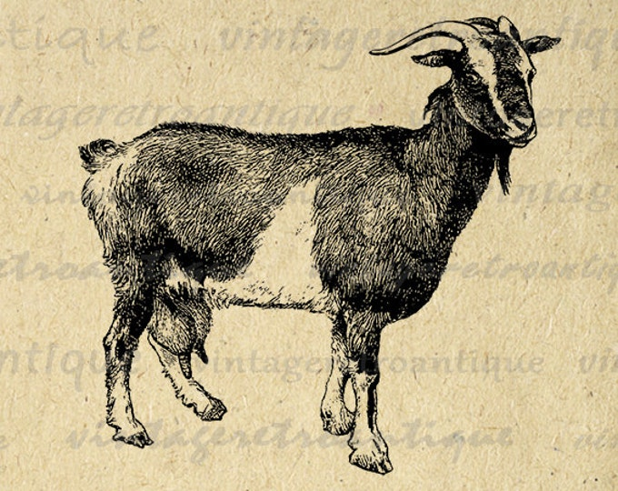 Goat Digital Image Antique Goat Graphic Farm Animal Illustration Download Printable Antique Vintage Clip Art Jpg Png Eps HQ 300dpi No.488