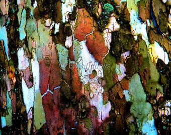 Sycamore Bark Fine Art Photograph Abstract Nature Home Decor