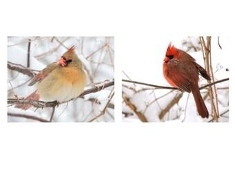 Set of 2 Bird Photographs - Cardinal - Winter Bird - Snowy Winter - Nature Art - Romantic Scene - Red Bird - lovely bird - Nature Photograph