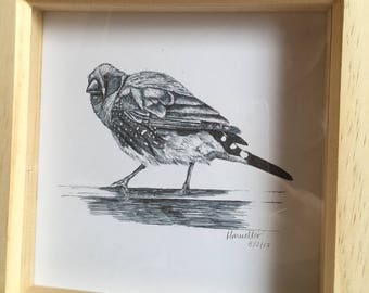 Finch Sketch Print in Wooden box Frame