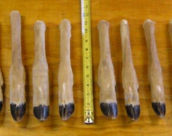 12 Preserved Straight Deer Legs
