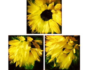 Flower Power, Yellow Art Set, Sunflower Photography Set of 3 prints, Flower Art Prints, Nature Wall Art, 8x8 Prints 10x10 Art 12x12 Art Set