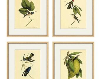 Hummingbirds art antique print set Bird art Nature print art print poster wall art print Victorian art old prints Garden Wall art print set