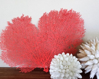 "Sea Fans, 12""-14"", Sea Fan Coral, Beach Decor, Sea Fan, Coastal Decor, Beach House Decor. Sea Fans Aqua, Turquoise, Blue, White"