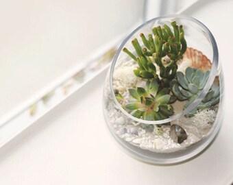 Succulent Terrarium, Glass Terrarium, Terrarium, Terrarium Kit, Succulent Kit, Gift for Mom