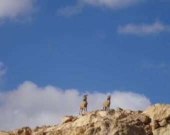 Ibex Climb