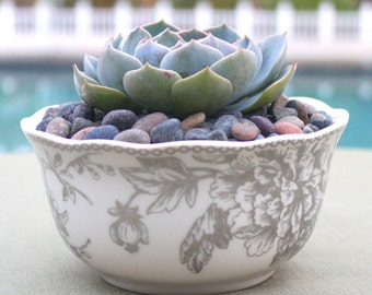Succulent Arrangement in White and Silver Floral China Bowl, Succulent Centerpiece, Hens and Chicks