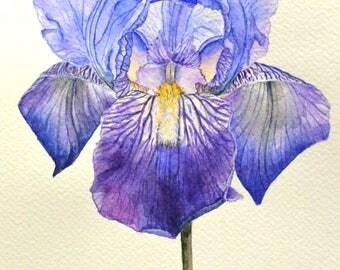 Original watercolor painting  Iris painting  Flower watercolor  Small painting  Original watercolor  Bright painting  Purple iris 3
