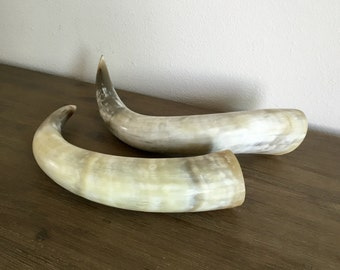 Vintage Animal Horns; Horn Taxidermy; Southwest Decor; Taxidermy Animal Horns; Ram Horns; Bull Horns; Farmhouse Decor; Vintage Taxidermy