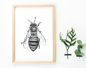 Hand drawn bee art print A4, black and white, insects drawing, botanical style, honeybee, bee print, home deco, nature print, animal poster
