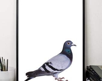 Pigeon print dove print birds print cute animals print wall art decor nursery print digital 5x7 8x10 12x16 black white minimalist art poster