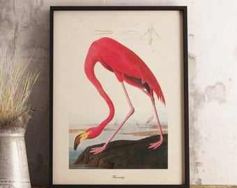 Flamingo Print:INSTANT DIGITAL DOWNLOAD Bird print, Antique Bird Painting