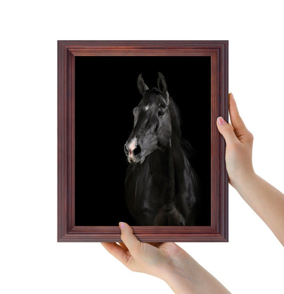 Wall Art Black Horse : Black horse print wall art modern home decor animal
