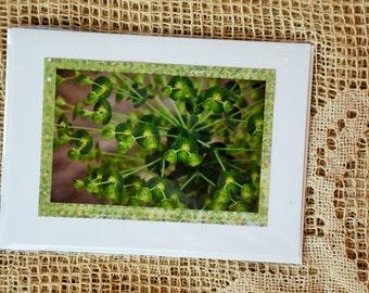 Garden Leaf-Spray note card