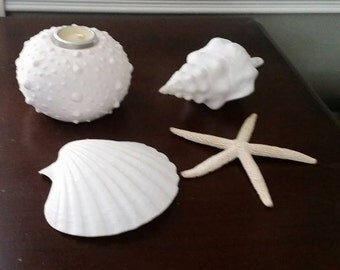 Collection of shells : Cockle Clam Shell, Horse Conch, sea Urchin candle holder