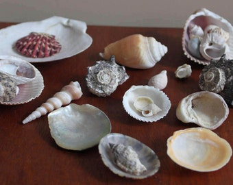 Instant collection //assorted sea shells  // DIY nature
