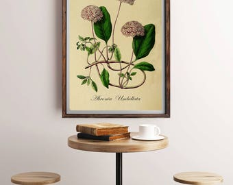 Antique Botanical Print, Botanical Art Decor, Plant Art Print, Plant Picture, Vintage Botanical Art, Botany Print, Vintage Floral Botanical