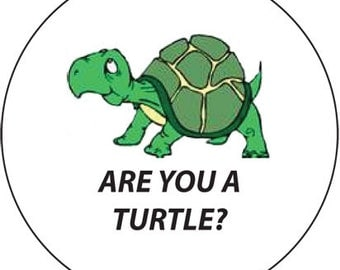 Are you a Turtle? A Colorful Refrigerator Magnet