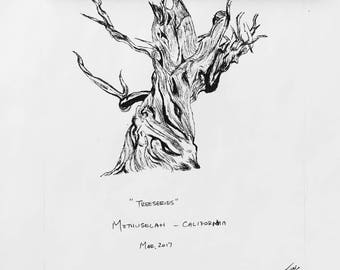 Tree Series - Methuselah