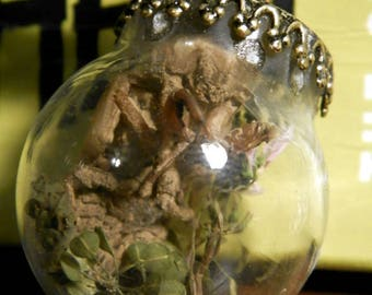 Real Cicada Skin Pendant with Dried Flowers