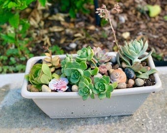 Rectangular Planter With Variety of Succulents