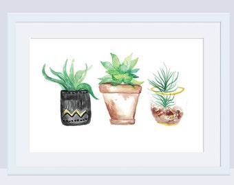 Succulent Flower Pots Watercolor