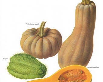 Set of 2 Vintage Vegetable Prints Squash 1970s Illustrated Color Plates Book Pages