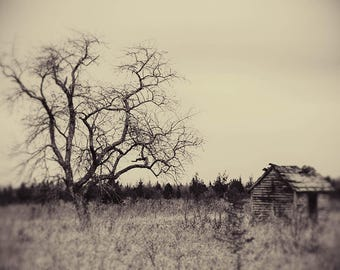 farm tree deserted abandoned fine art photography office decor home decor rural decay