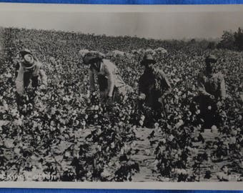 RPPC 4 Black Men Picking Cotton African American History Postcard