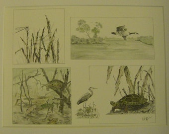 Wildlife landscape dragonfly great blue heron birds painted turtle fish watercolor wash graphite pencil drawing montage m3DrawingPlus