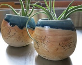 Medium Handmade Ceramic Potted Airplant Tillandsia One of a Kind Gift Idea Home Decor Live Plant, Artisan Pottery by Licia Lucas Pfadt
