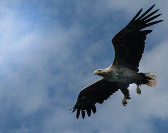 Wild Wonder - Eagle - Fine Art Photography - Postcard for Postcrossers