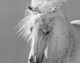 The White Stallion Runs Up Close - Fine Art Horse Photograph - Fine Art Print - Horse - Fine Art Print - Lusitano
