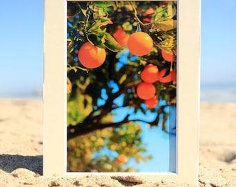 Orange Tree Photo Print - Botanical Photography - Fine Art Photograph - Photo Gifts - Beach House Decor - Size 8x10, 5x7, or 4x6
