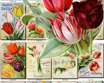 TULIPS-2 Collection of 132 vintage images tulipa botanical pictures High resolution digital download printable 300 dpi flowerbed bouquet