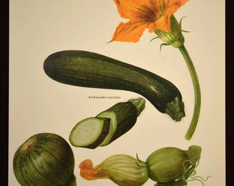 Zucchini Print Kitchen Wall Decor Art Vegetable Food