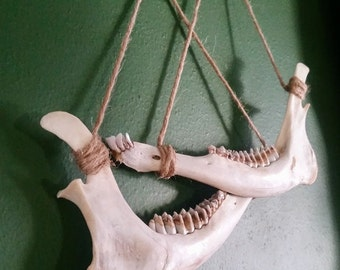 Deer Jaw Bone Wall Hanging